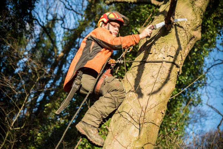 Wins for expanding tree surgery business